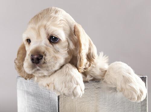 Como Saber se um Cão Está Bem Socializado