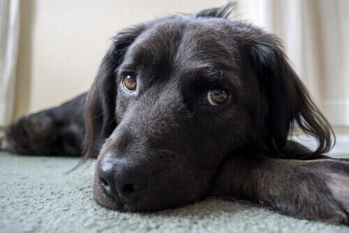 6 coisas que você acha que seu cão gosta, mas…