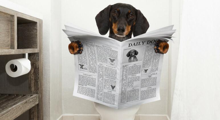 7 Razões Porque o Seu Cão Faz Xixi em Casa