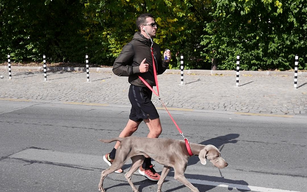Correr com o seu cão: o que fazer e o que evitar